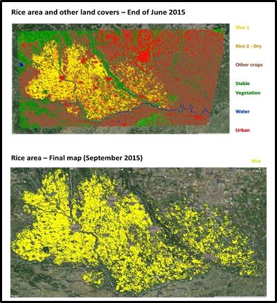 Italian Rice Crop maps  - 2015